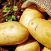 potatoes-vegetables-erdfrucht-bio-162673.jpg